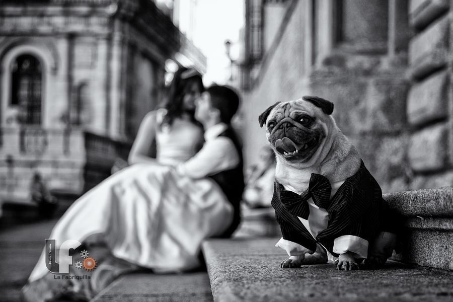 2015best_Wedding_009